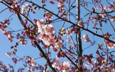 Reisebüro für Rosenheim: Pauschalreisen bieten Sicherheit